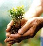 Journée mondiale de l'arbre
